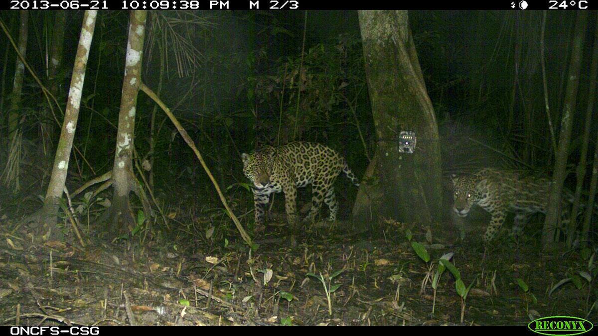 is_jaguars_csg.jpg