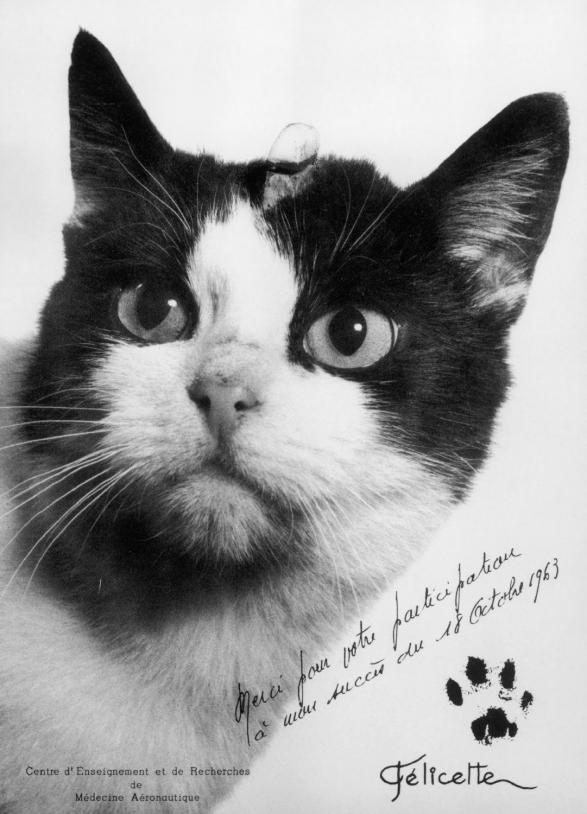 La chatte Félicette