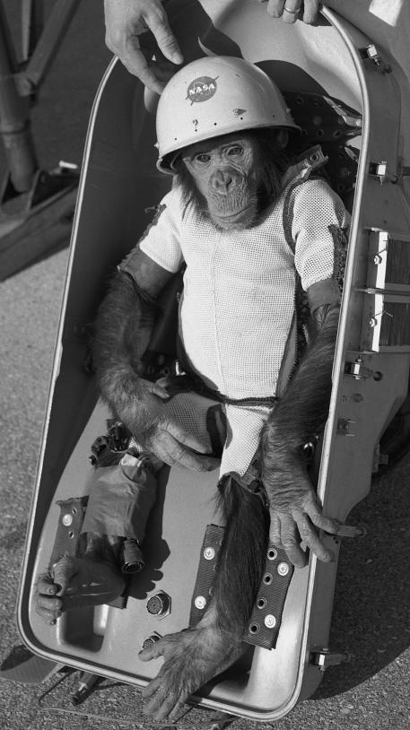 Ham le chimpanzé